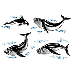 Cartoon sea whales vector image