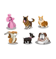 set funny cute various dogs breeds vector image