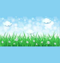 spring background with sky and grass vector image