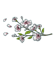 sakura blossom cherry branch with flowers and bud vector image vector image