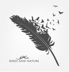 Feather with flying flock of birds vector