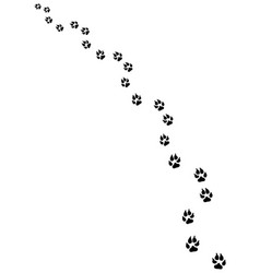 footprints of dog vector image