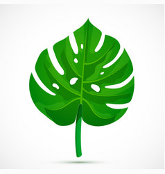 Monstera leaf tropical plant vector