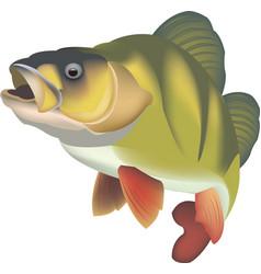 Predator fish freshwater lurking vector