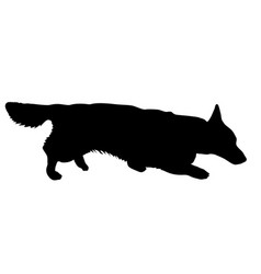 welsh corgi dog silhouette on a white background vector image