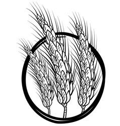 doodle wheat grain vector image