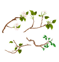 Branch various sprigs twig apple tree and bush vector