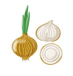 bulb onion set - whole half and slice vector image