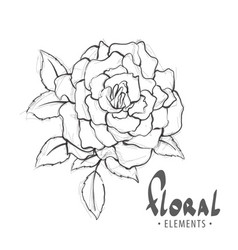 chic rose in black and white vector image