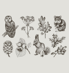collection highly detailed hand drawn owl vector image