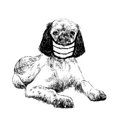 english setter dog with mask vector image