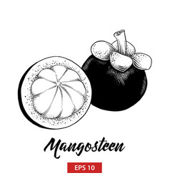 Engraved style for posters decoration and print vector