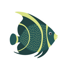french angelfish pomacanthus paru marine fish vector image