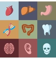 Internal human organs flat icons set vector image
