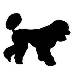 Poodle dog silhouette on a white background vector