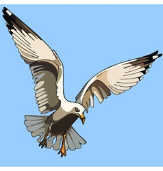 White bird seagull in flight vector