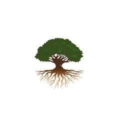 Creative oak tree logo vector