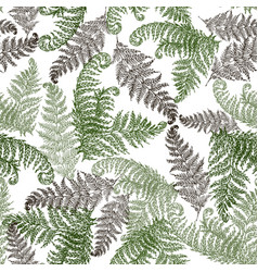 fern herbs tropical forest plant leaves seamless vector image