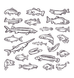 kind of sea food sea fish hand drawn collection vector image