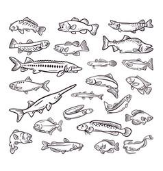 kind sea food sea fish hand drawn collection vector image