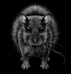 mouse artistic graphic black and white portrait vector image