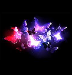 swarm of night butterflies vector image