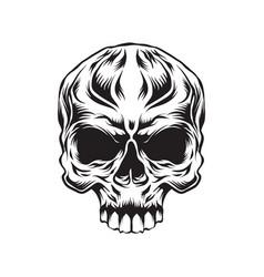 head skull vector image