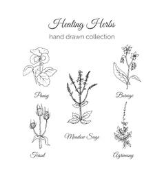 holistic medicine healing herbs vector image
