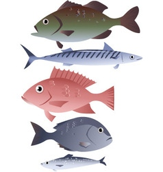 Assorted edible fish vector image vector image