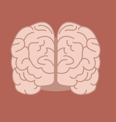 Intelligence of the human brain vector