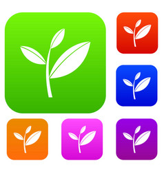 tea leaf sprout set collection vector image