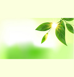 tree branch green leaves and sun copy space vector image