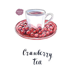 cranberry tea in a white cup vector image