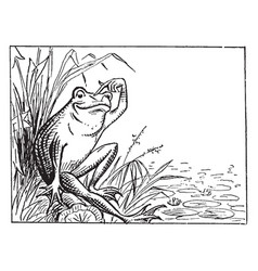 Frog sitting on bank and scratching head vintage vector