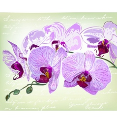 beautiful orchid flowers vector image