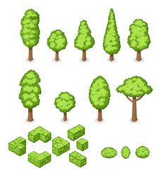 Isometric set of park plants trees and vector