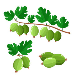 Set cartoon juicy gooseberry with green leaves vector