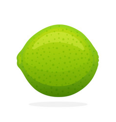 Whole lime vector