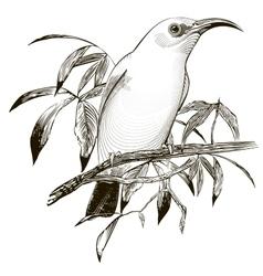 bird Engraving vector image