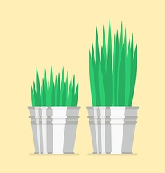 Plant in zinc pot flat icon vector image