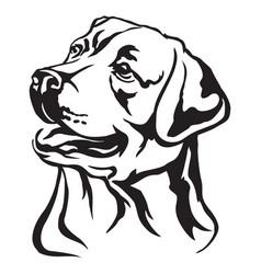 decorative portrait labrador retriever vector image