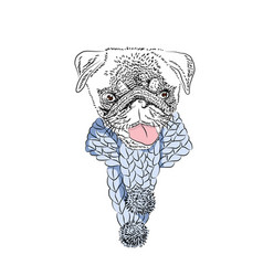 Dog with knitted scarf cute pug portrait vector