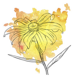 drawing flowers daisy vector image