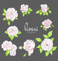 pink roses on a dark background vector image