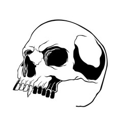 skull collection hand drawn skulls hard core vector image