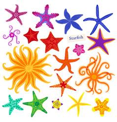 sea stars set multicolored starfish on a white vector image