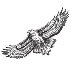 hand drawn hawk vector image vector image