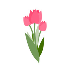 pink tulips with green foliage flowers vector image