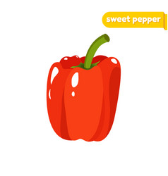 sweet pepper isolated on vector image