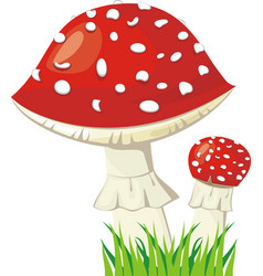 Two fly agaric in a grass vector